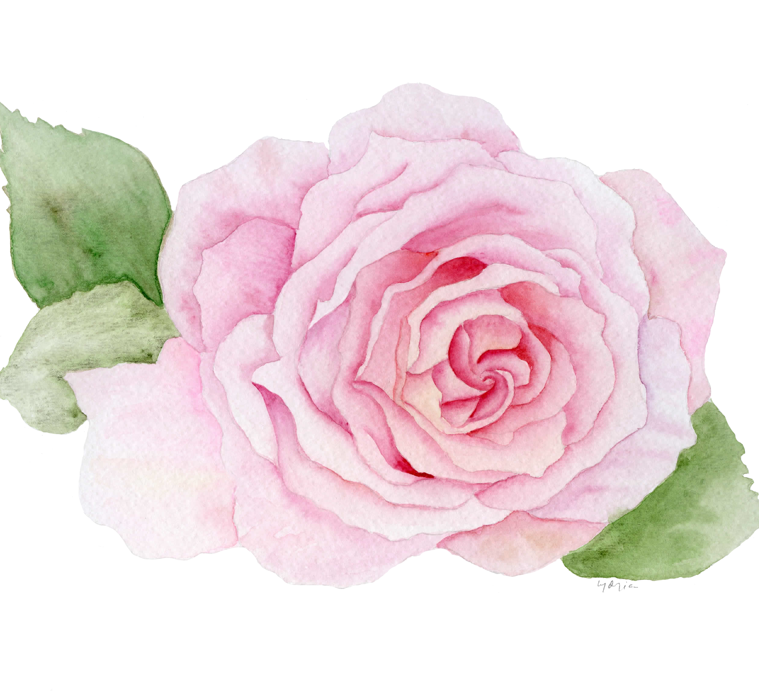 Feature Post10-Pink Rose